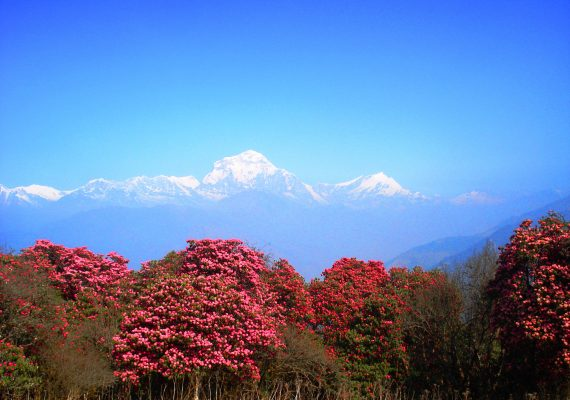 Ghorepani on the way to Annapurna Base camp in March