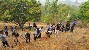 Tree plantaion