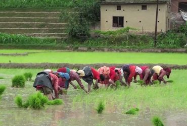 Rice Plantation festival in Nepal