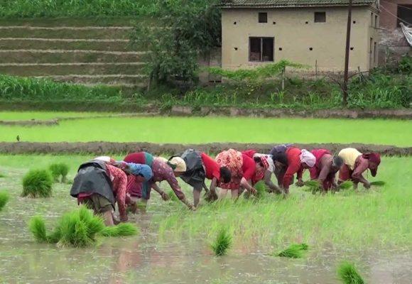 Rice Plantation festival in Nepal